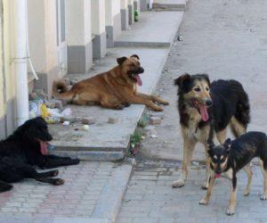 УГХ будет принимать заявки от жителей на отлов безнадзорных животных