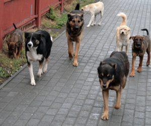 Подрядчик начал отлов безнадзорных собак