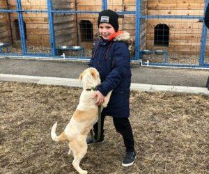 Волонтёры фонда «Преданное сердце» сотрудничают с приютом для бездомных животных