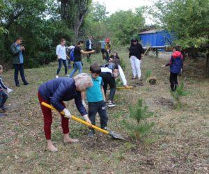 В рамках акции «Зеленая Россия» высадили крымские сосны