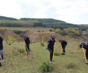 В Кисловодске высадили три десятка крымских сосен и туй