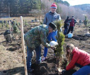 Общественные экологи высадят 200 деревьев на аллеях Славы
