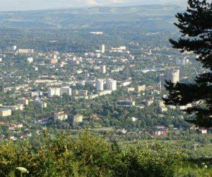 Городские леса приросли на 200 гектаров