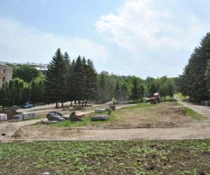 У мемориала Воинской славы высадят более 40 хвойных деревьев
