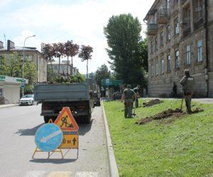 В Кисловодске высаживают молодые деревья