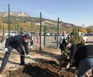 На территории нового физкультурно-оздоровительного комплексавысадили 45 сосен
