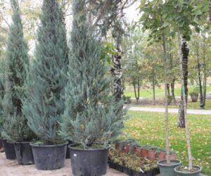 Продолжается озеленение мемориала Воинской Славы