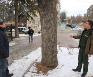Общественные экологи провели «зеленый рейд» по проспекту Ленина